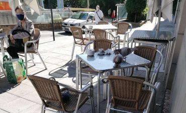 palomas-en-terraza.jpg