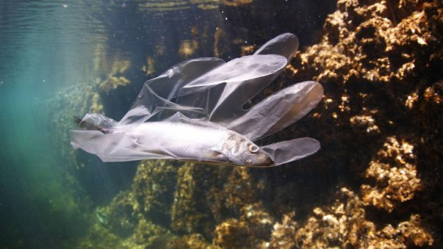 pez-enredao-en-plastico.jpg