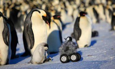 pinguinos-peregrinos.jpg