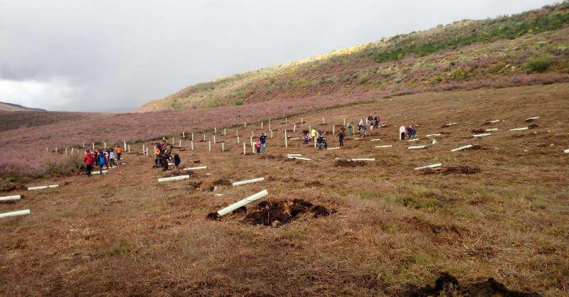 plantacion-frutales-para-osos-en-anllares.jpg