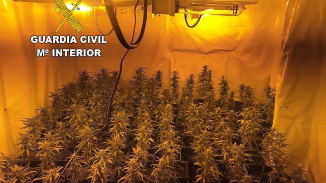 plantacion-marihuana-san-miguel-de-las-duenas.jpg