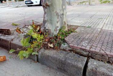 platano-cacabelos-calle-camino-santiago.jpg