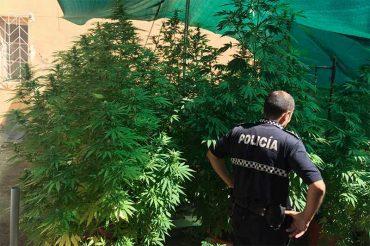 policia-cultivo-de-drogas.jpg