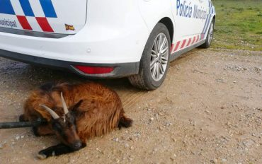 policia-municipal-cabra.jpg