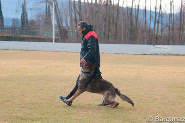 seminario-adiestramiento-canino.jpg