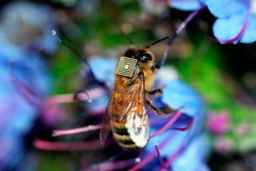 sensor-en-abejas.jpg