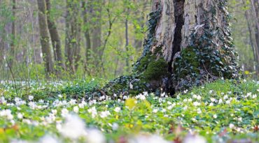 suelo-de-bosque.jpg