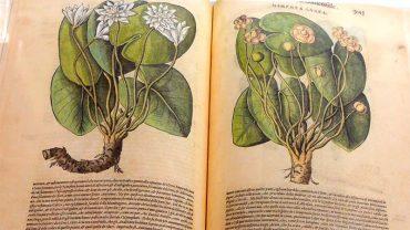templum-libri-botanica.jpg