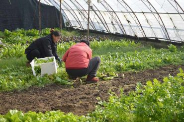 trabajadores-en-invernadero.jpg