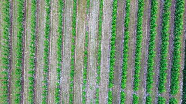 vinedo-vista-dron.jpg